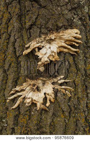 Tree Bark Mushrooms