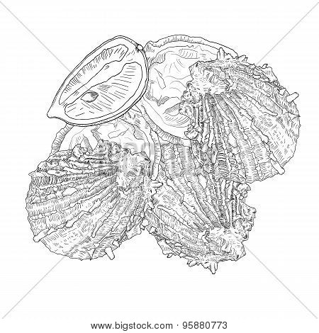 Hand drawn oyster with  lemon.  Sea food.