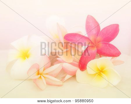 Abstract Abstract group of Plumeria Flower Background. Beautiful Flowers Made With Colorful Filters.