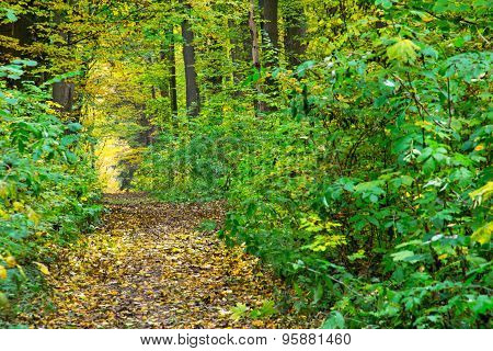 Path Through Autumn Green-yellow Forest