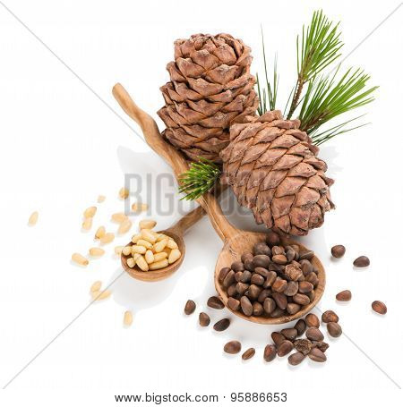 Siberian Pine Nuts And Cones
