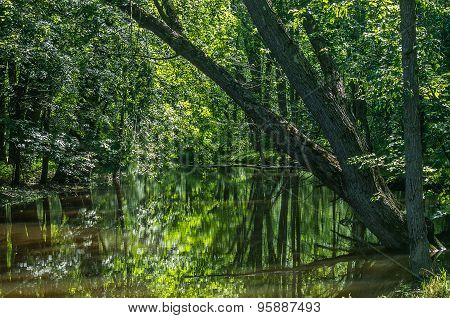 Leaning Tree Over Water