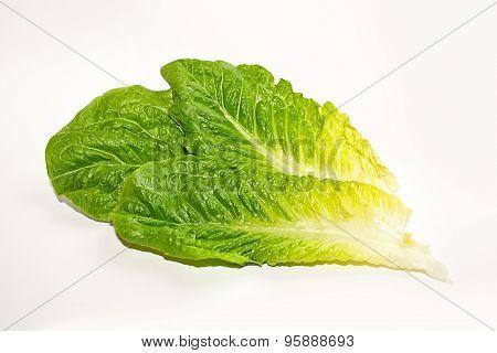 Leaves Of Romaine Lettuce On White Background.
