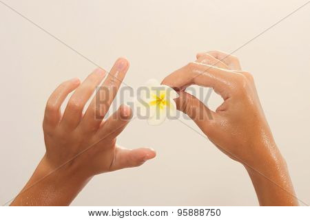 Close-up Of Female Hands In Oil Holding Flower On Beige Background