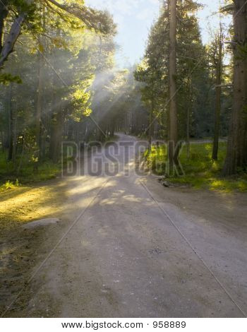 Rays On A Trail