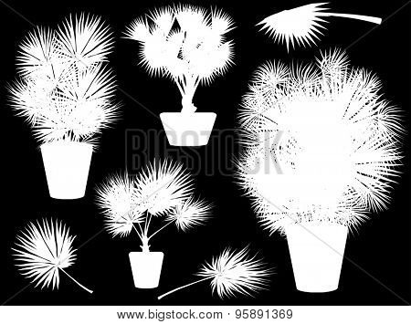 illustration with white palm trees in pots isolated on black background