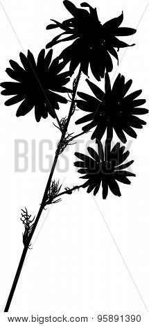 illustration with chamomile flower silhouettes isolated on white