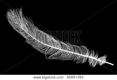 illustration with ostrich feather silhouette isolated on black background