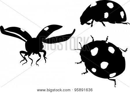 illustration with ladybugs isolated on white background