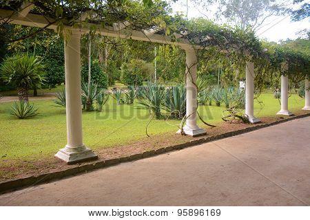 Parkway In Rio De Janeiro Botanical Garden.