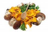 stock photo of bolete  - Mushrooms boletes and golden chanterelle against white background - JPG
