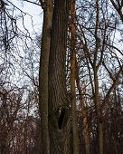 stock photo of hollow  - Hollow on a tree trunk in the forest - JPG
