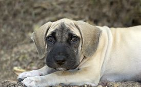 pic of puppy eyes  - Cute puppy with big puppy dog eyes outdoors - JPG