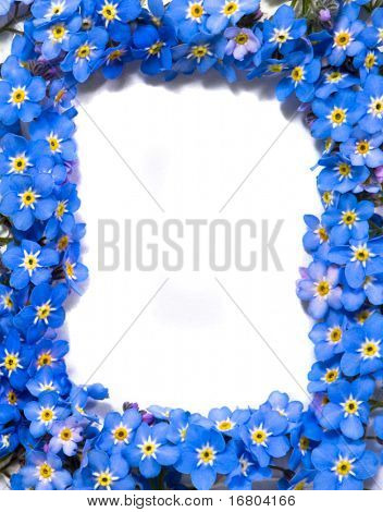 forget-me-not flowers frame