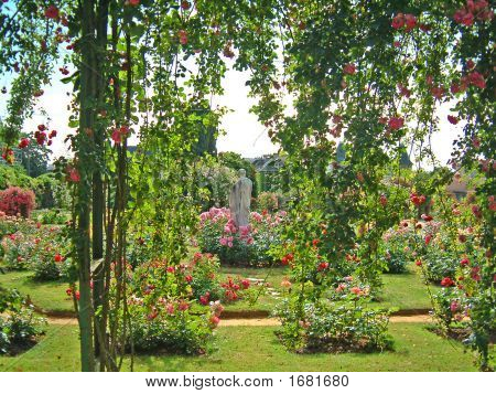 Garden With Colorful Flowers