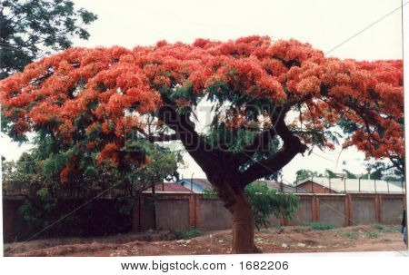 Zambia In Full Bloom