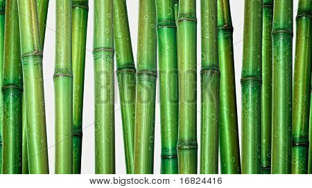 classic japanese green bamboo isolated on white background