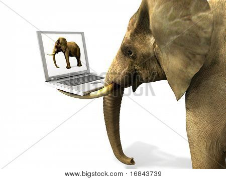 Elephant and Laptop