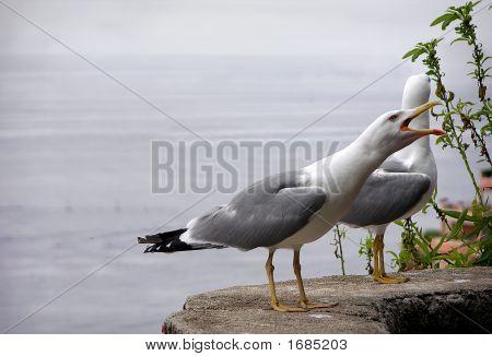 Albatross Scream