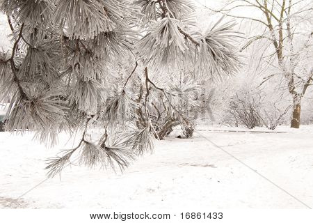 The snow has covered trees