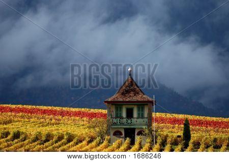 Fall Mountain Vineyard