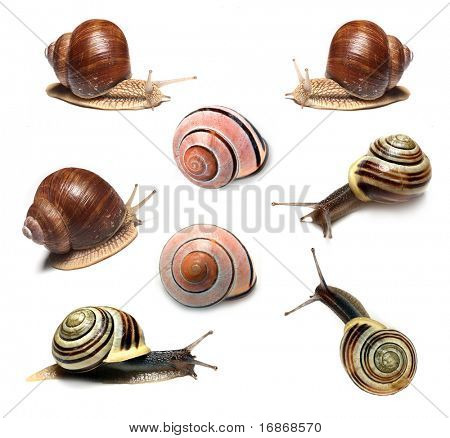Snails collection on white background
