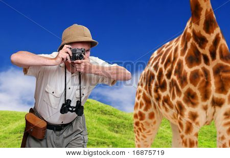 Funny picture. Crazy wildlife photographer and giraffe. Telephoto style - shallow DOF. Great for calendar.