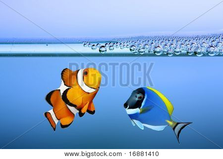 Tropical reef fish - Clownfish and Surgeonfish