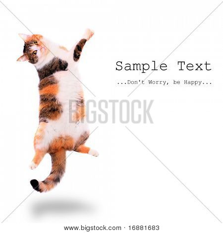 Dancing spotted cat with easy removable text.