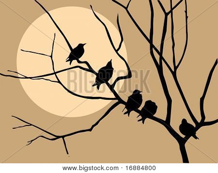 migrating starling on branch tree
