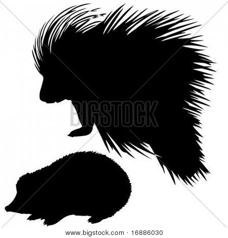 vector silhouette of the hedgehog and porcupine on white background