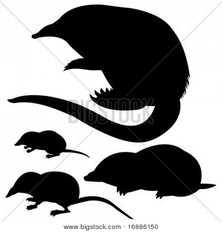vector silhouette of the mole, mouse and desmans on white background