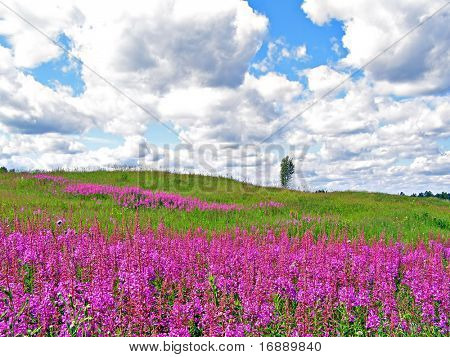 lilac flowers on field