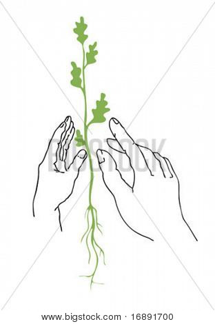 vector illustration of the plants in hand