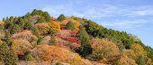 korankei Forest autumn park Nagoya Japan panorama poster