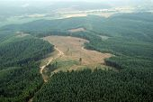 Clearcut Logging in Washington State
