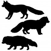 image of wolverine  - vector silhouette polar fox - JPG