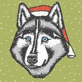 Vector dog concept. Siberian husky dog in Christmas Santa hat vector illustration poster