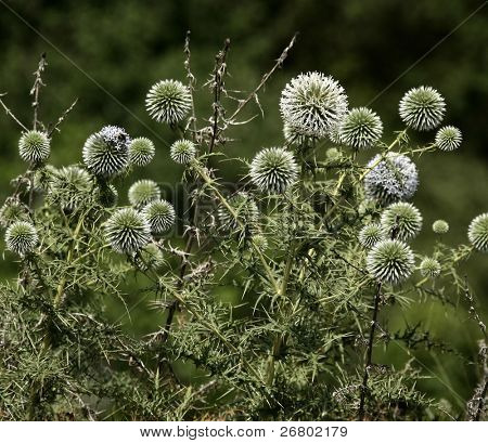close up shot of thorny plant in nature