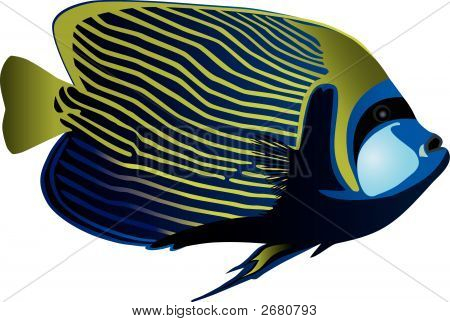 Angelfish.