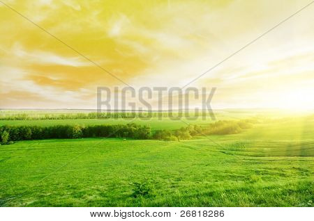 Sunset in the summer in countryside