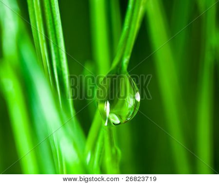 grass and drop