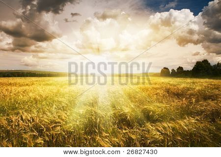 beautiful summer landscape and  sky