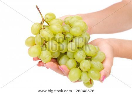 The female hand holds one grapes on white