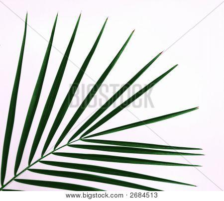 Green Palm