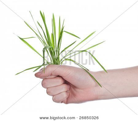 hend with grass bouquet isolated on white background