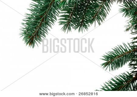 A sprig of pine, isolated on a white background. Use alone or add your own decorations. Or duplicate and string together to make your own garland!