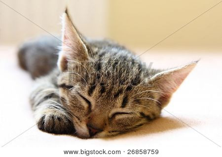 Young cat sleeping on the bed