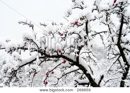 Frozen Apple Tree
