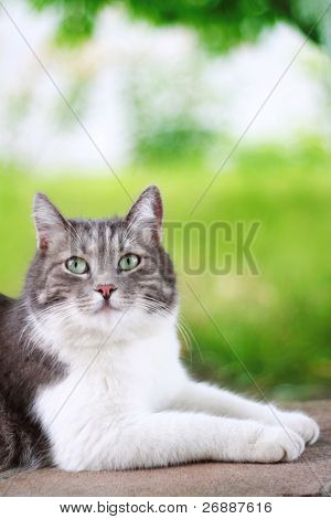 Cute cat looking up outdoors